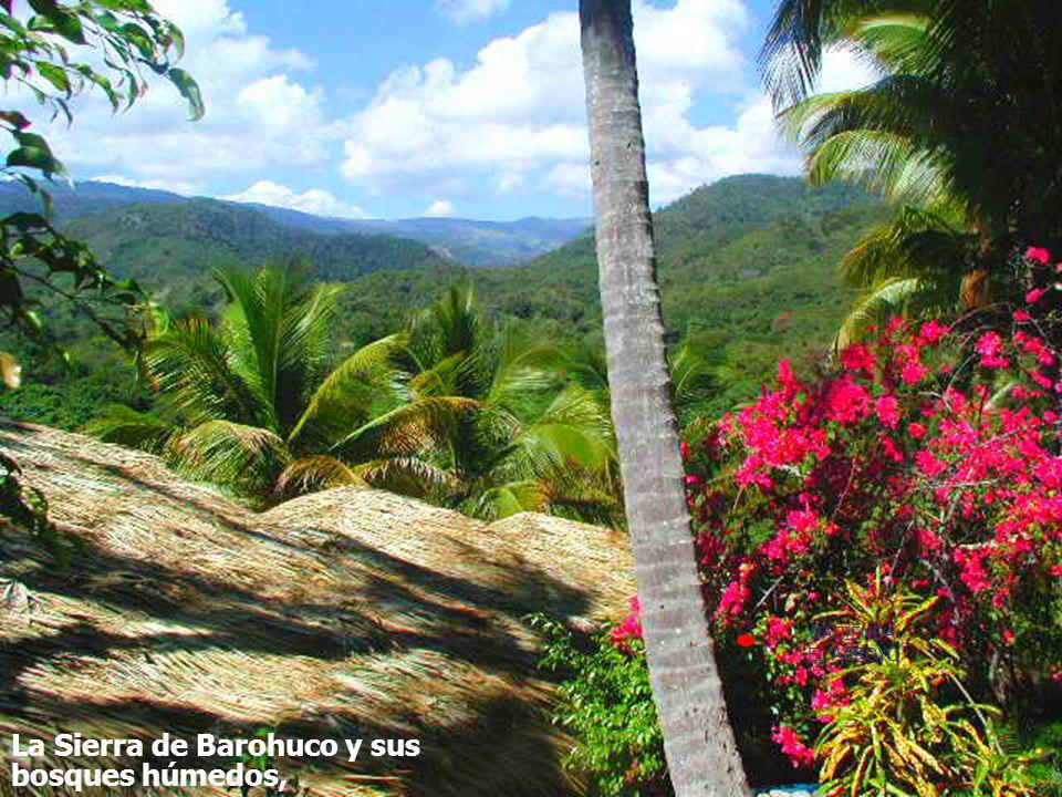 La Sierra de Barohuco y sus bosques húmedos,