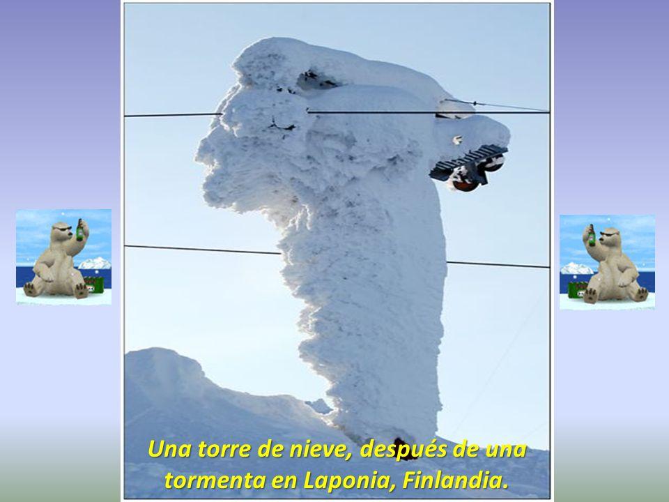Una torre de nieve, después de una tormenta en Laponia, Finlandia.