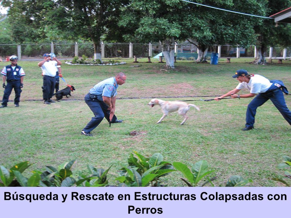 Búsqueda y Rescate en Estructuras Colapsadas con Perros