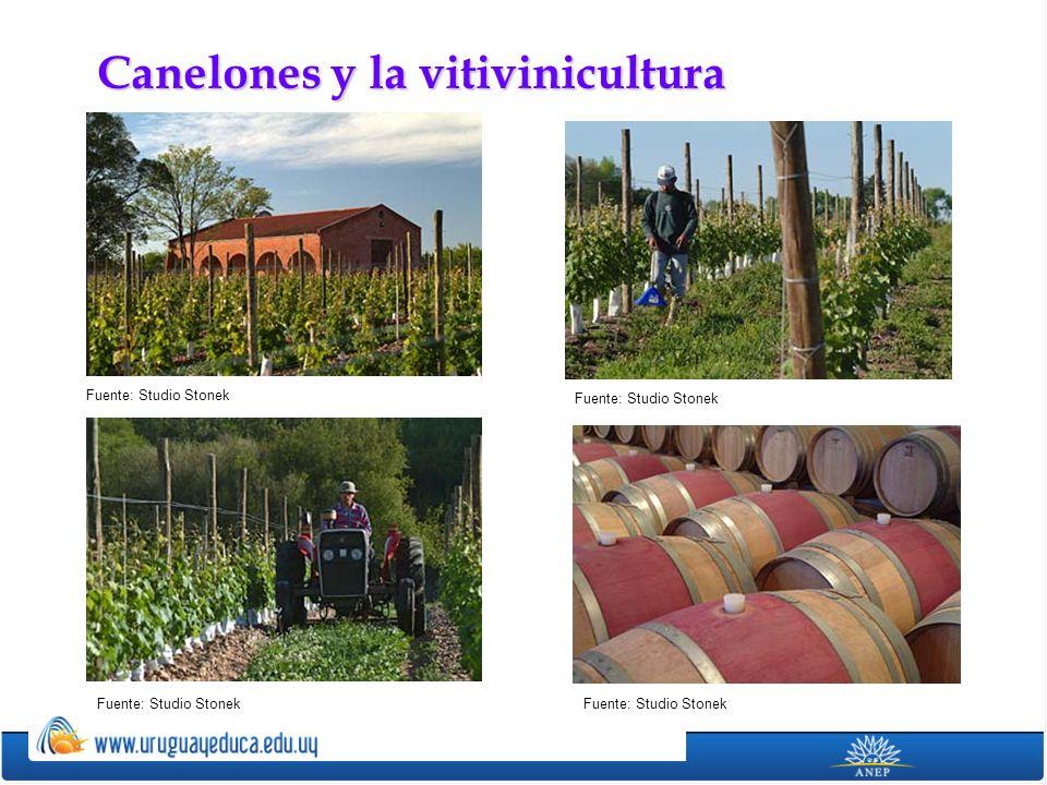 Canelones y la vitivinicultura