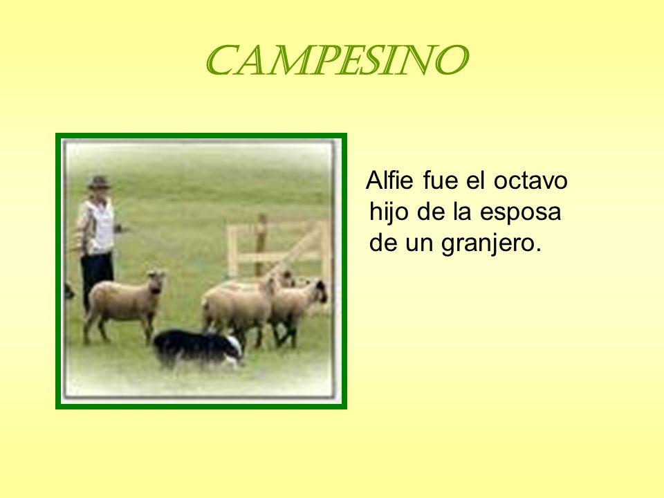 Campesino Alfie fue el octavo hijo de la esposa de un granjero.