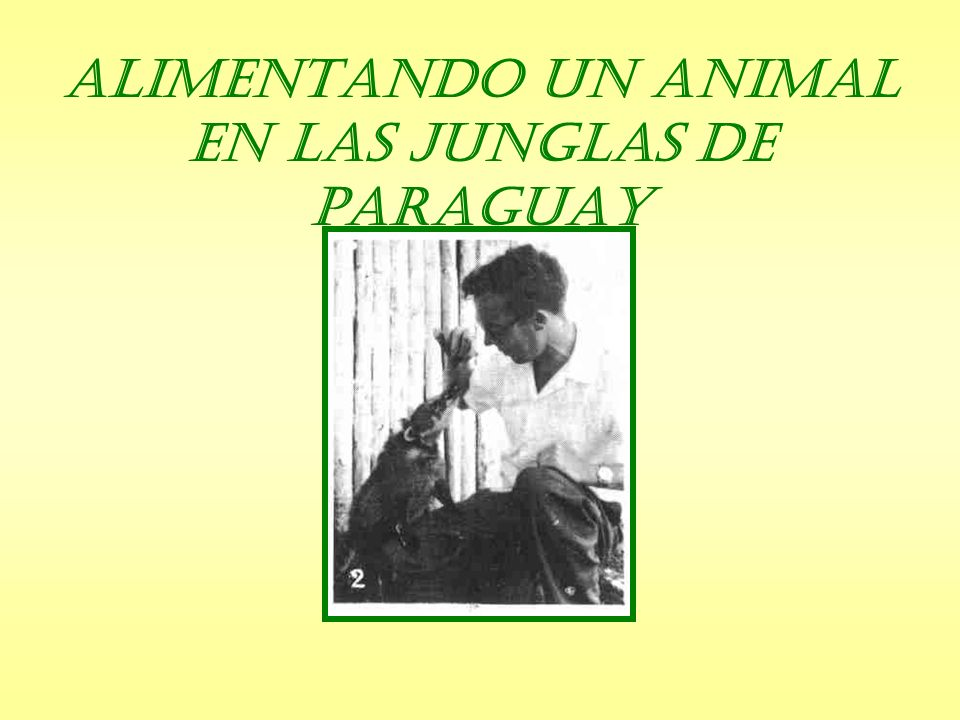 Alimentando un Animal en las Junglas de Paraguay