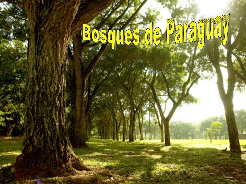 Bosques de Paraguay