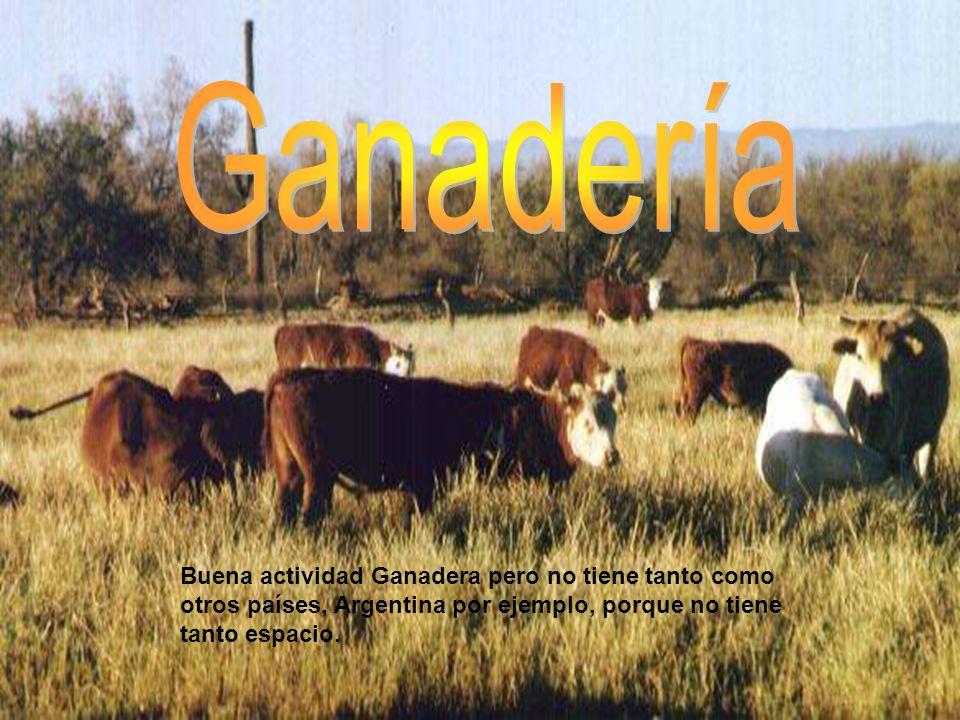 Ganadería Buena actividad Ganadera pero no tiene tanto como otros países, Argentina por ejemplo, porque no tiene tanto espacio.