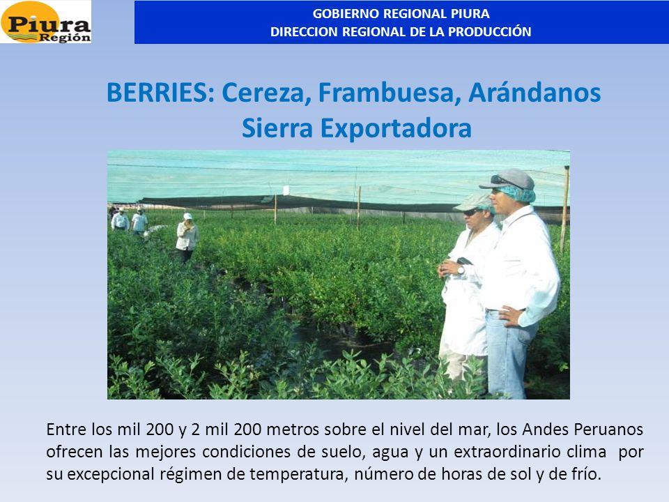 BERRIES: Cereza, Frambuesa, Arándanos Sierra Exportadora