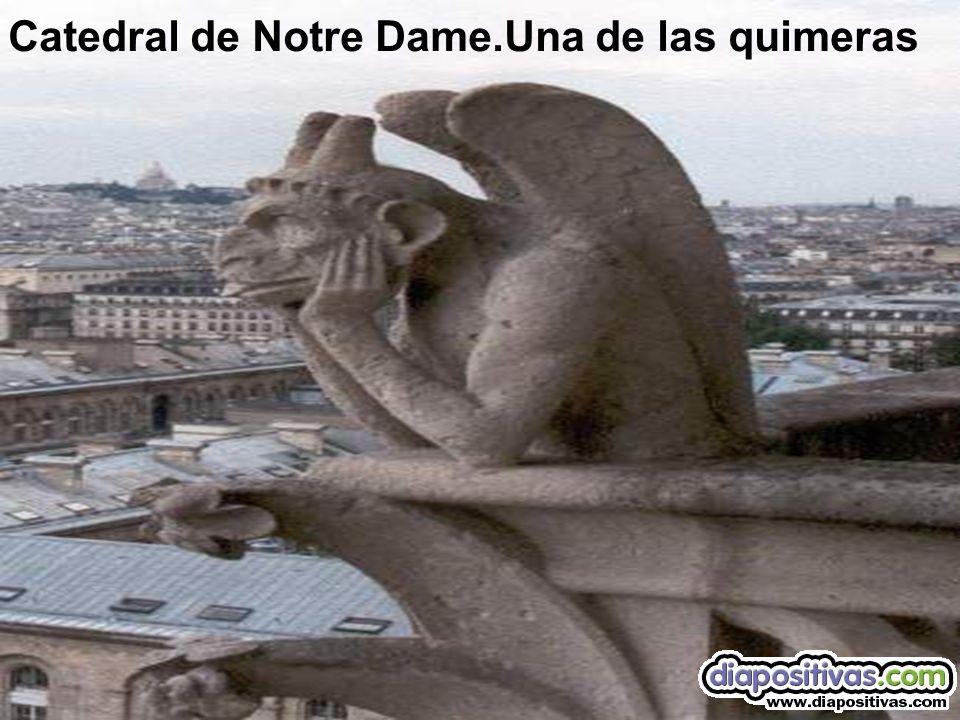 Catedral de Notre Dame.Una de las quimeras