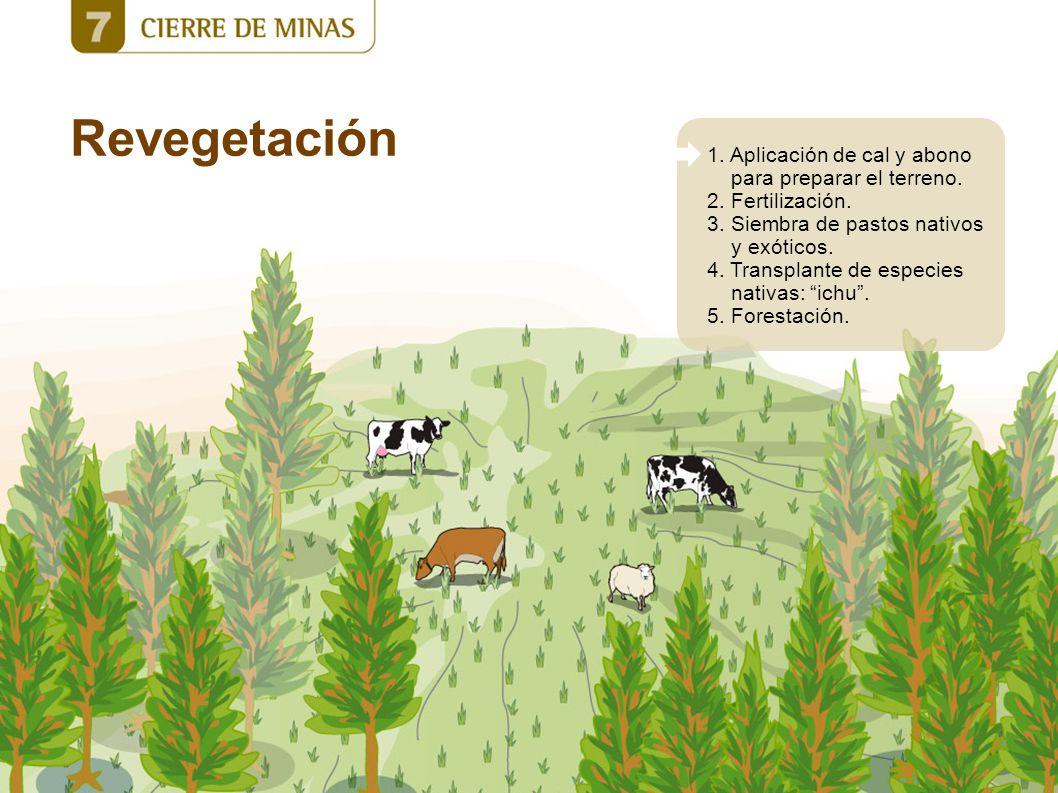 Revegetación 1. Aplicación de cal y abono para preparar el terreno.