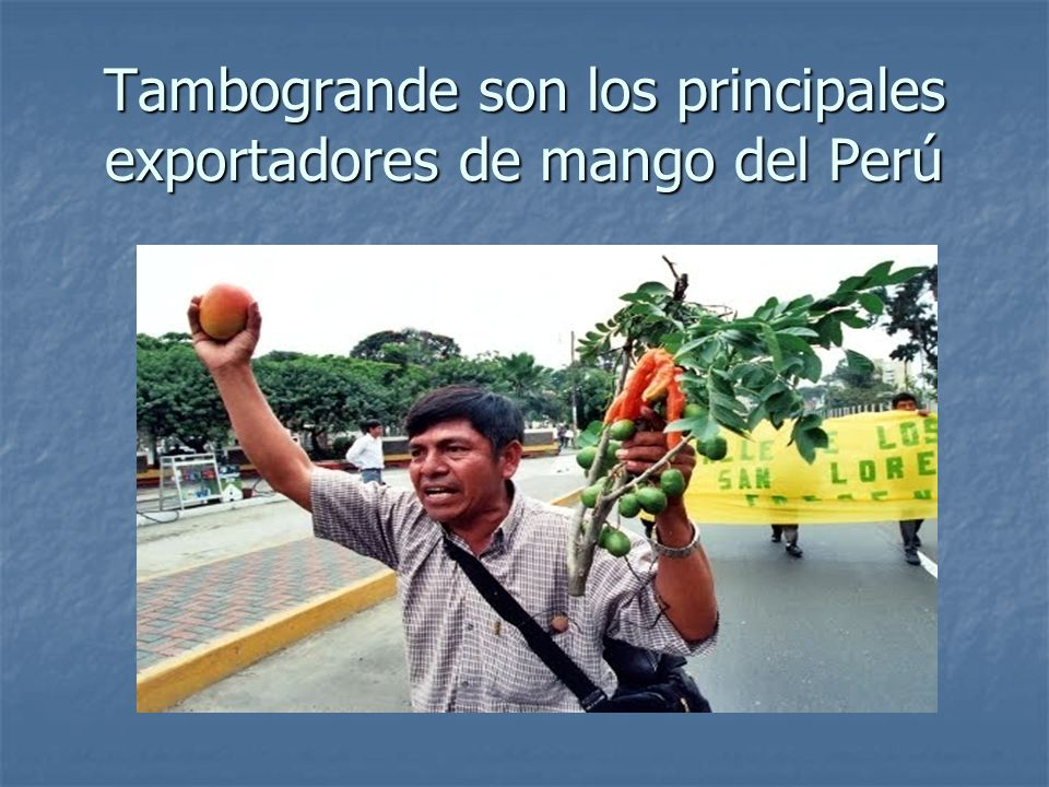 Tambogrande son los principales exportadores de mango del Perú