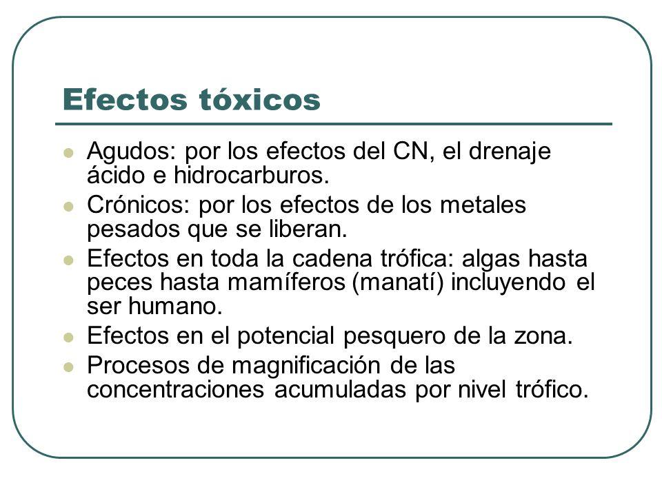Efectos tóxicos Agudos: por los efectos del CN, el drenaje ácido e hidrocarburos. Crónicos: por los efectos de los metales pesados que se liberan.