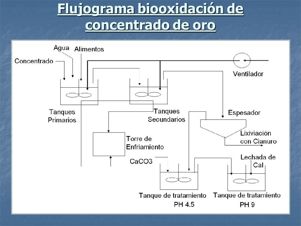 Flujograma biooxidación de concentrado de oro