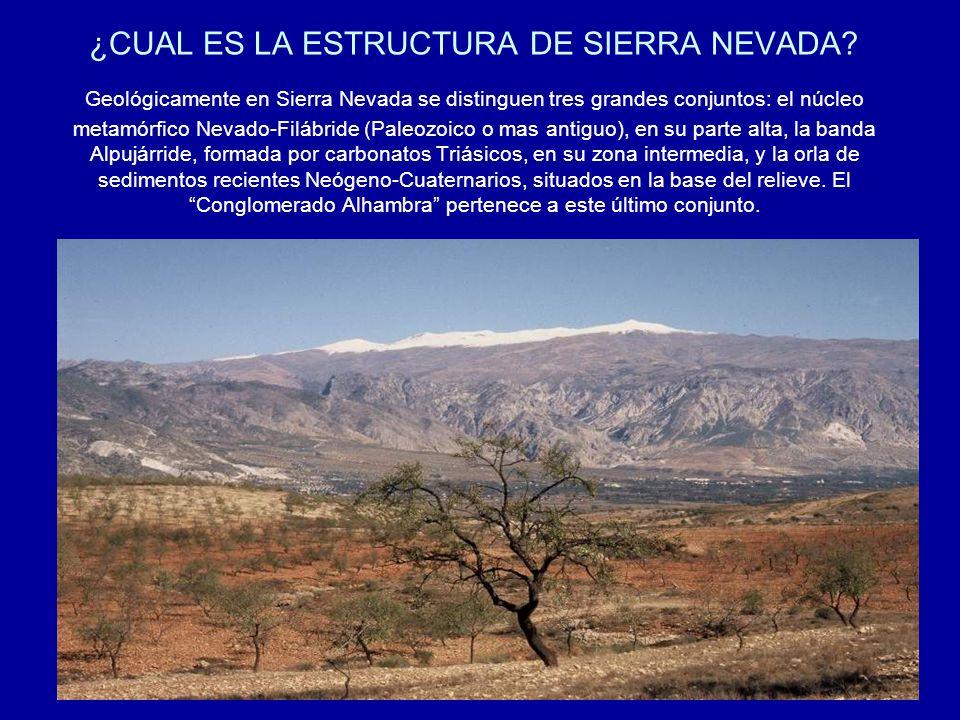 ¿CUAL ES LA ESTRUCTURA DE SIERRA NEVADA