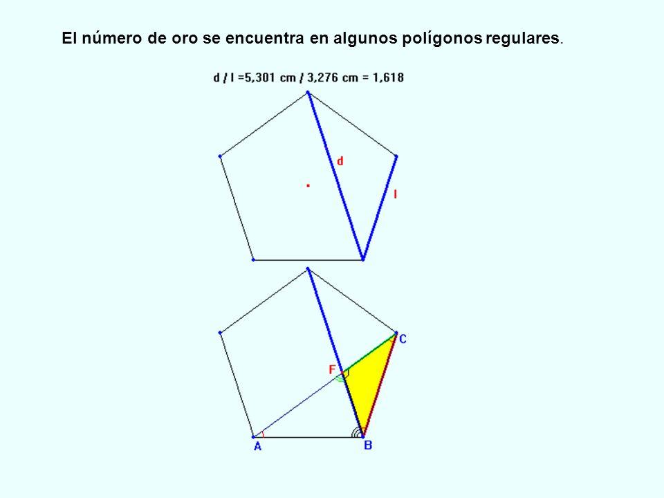 El número de oro se encuentra en algunos polígonos regulares.