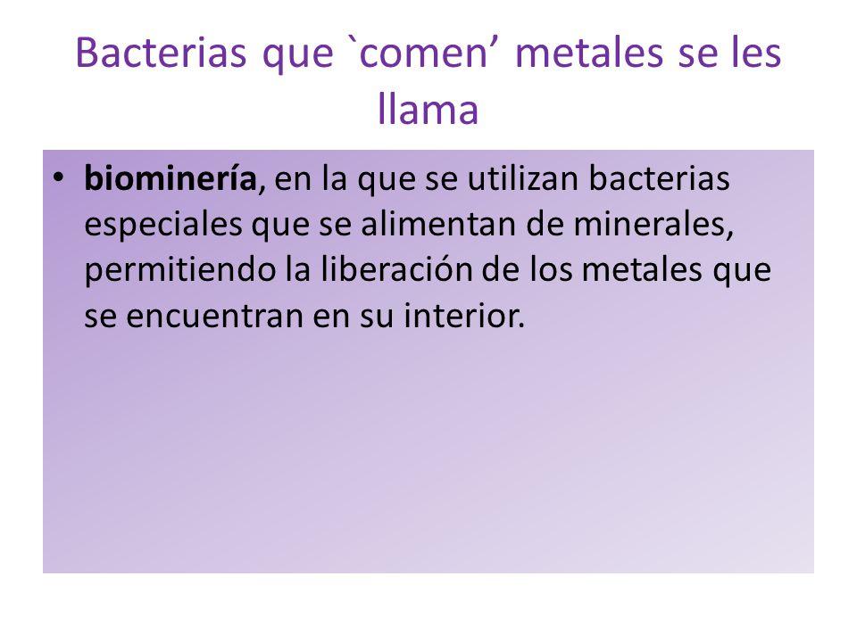 Bacterias que `comen' metales se les llama