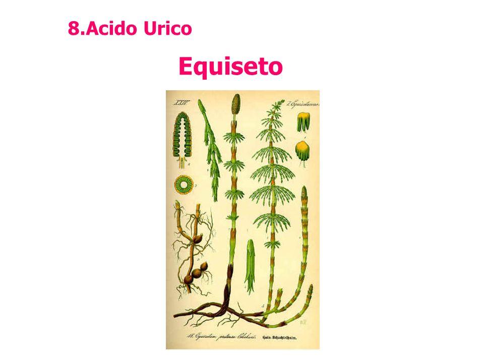 Acido Urico Equiseto