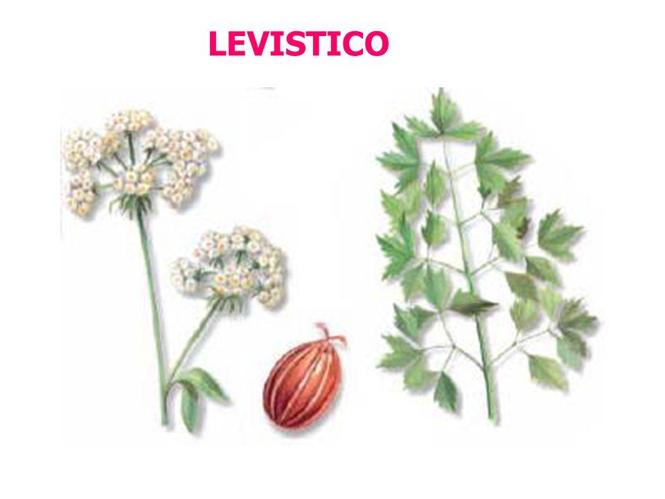 LEVISTICO