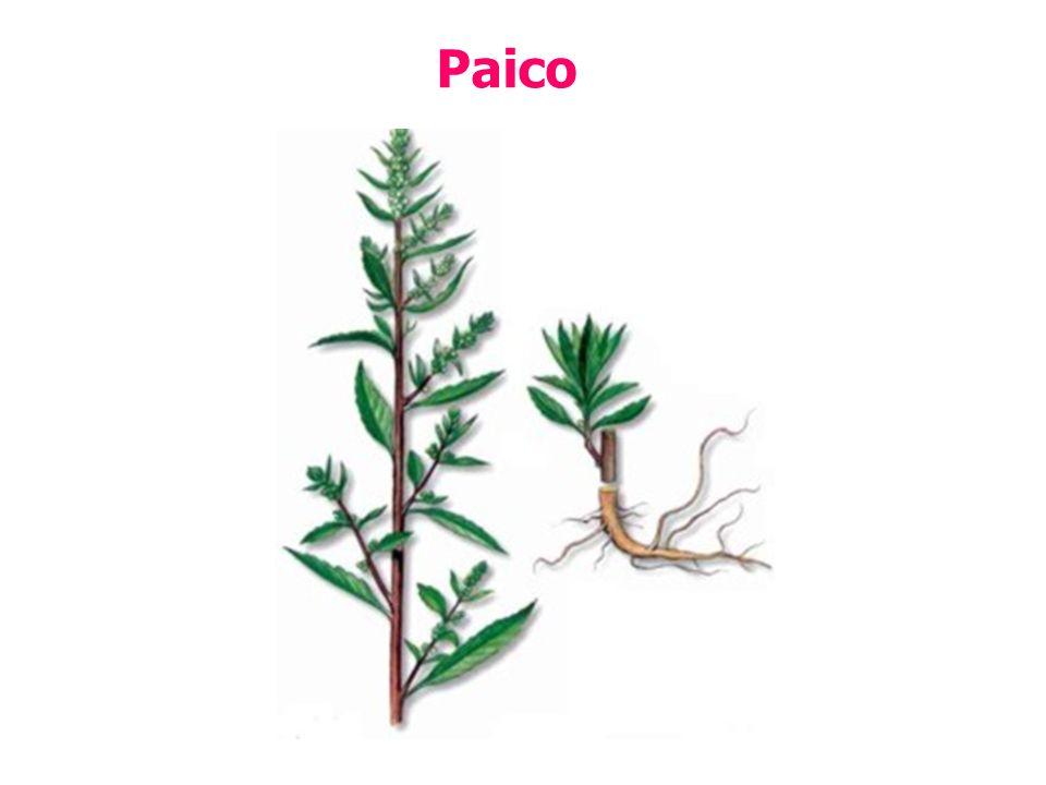 Paico