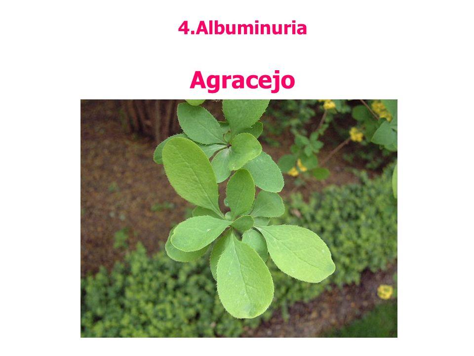 Albuminuria Agracejo