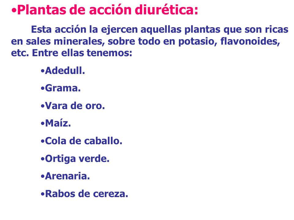 Plantas de acción diurética: