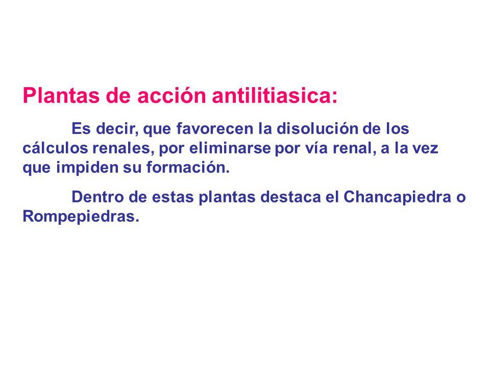 Plantas de acción antilitiasica: