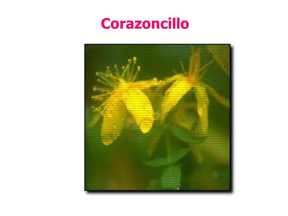 Corazoncillo