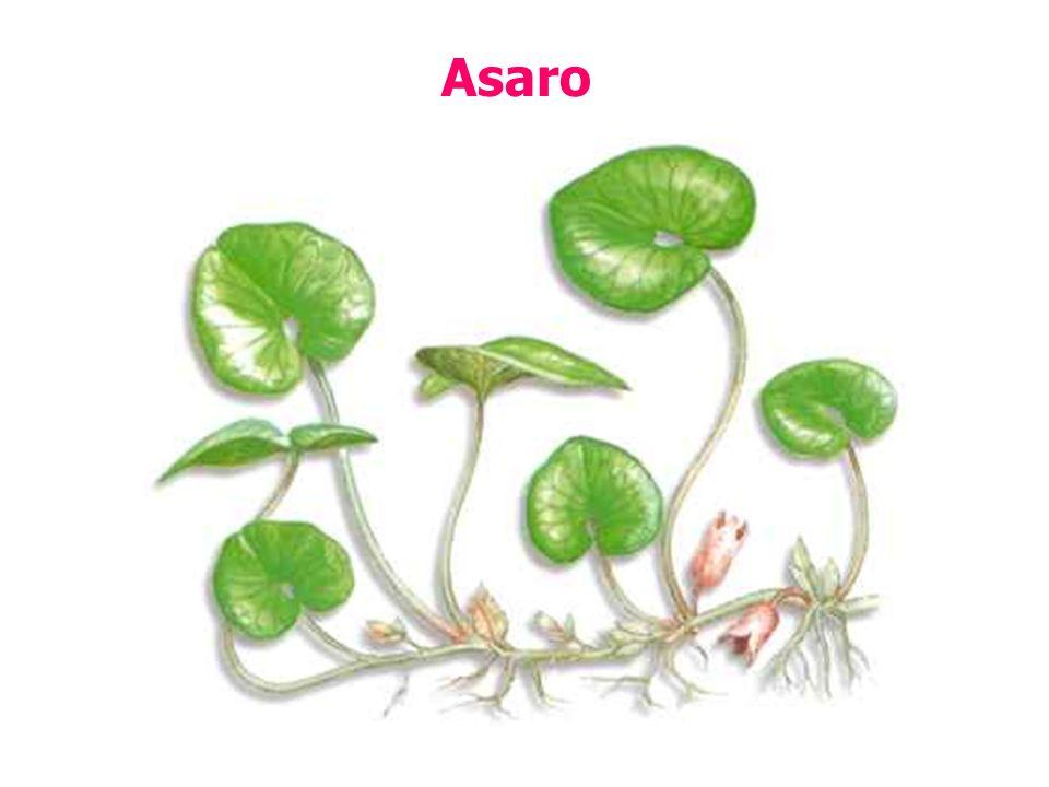 Asaro