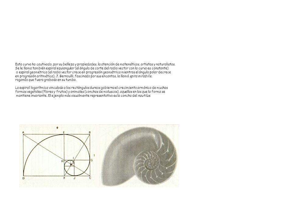 Esta curva ha cautivado, por su belleza y propiedades, la atención de matemáticos, artistas y naturalistas.