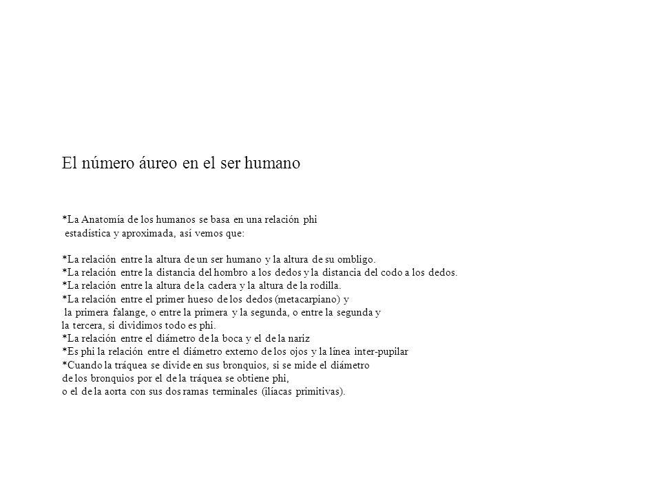 El número áureo en el ser humano