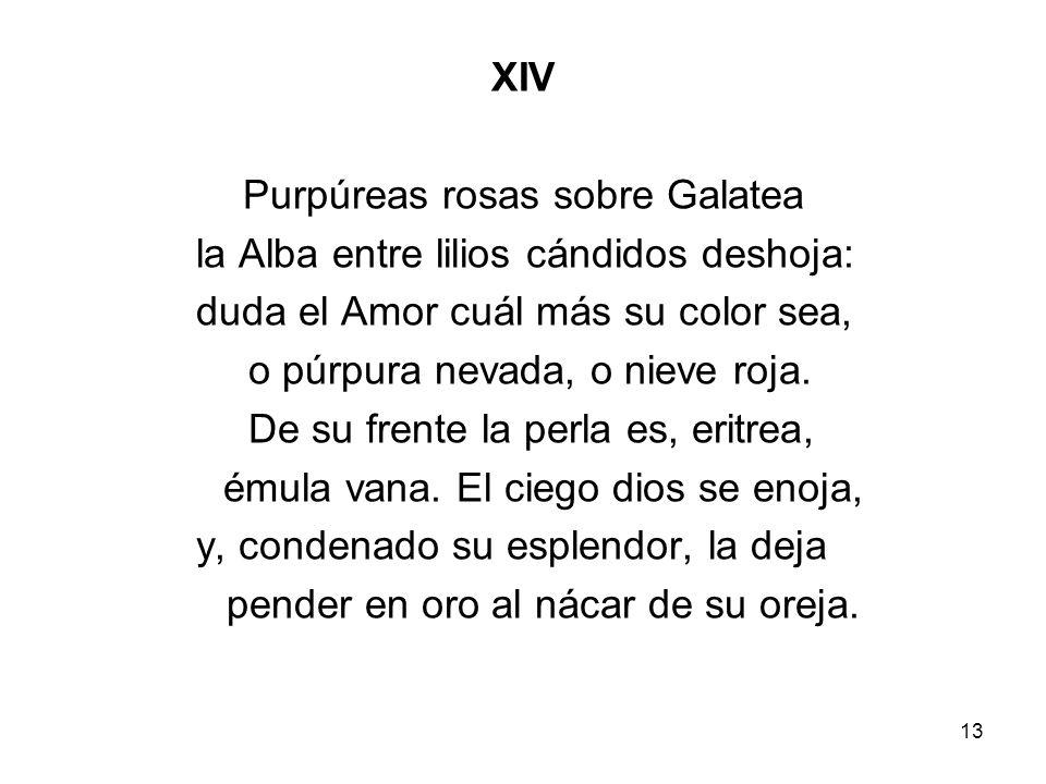 Purpúreas rosas sobre Galatea la Alba entre lilios cándidos deshoja: