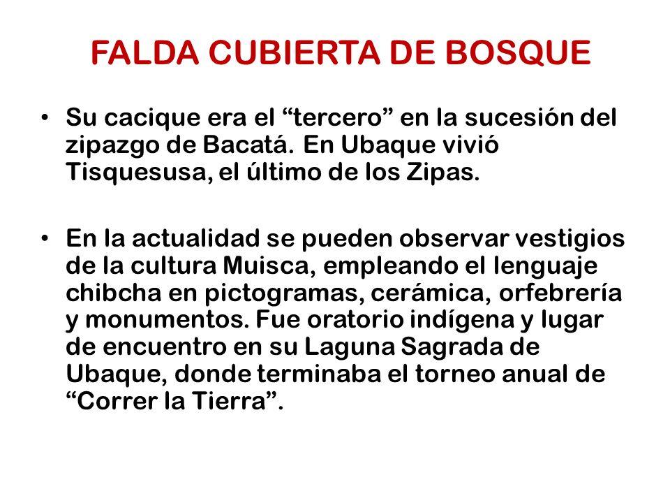 FALDA CUBIERTA DE BOSQUE