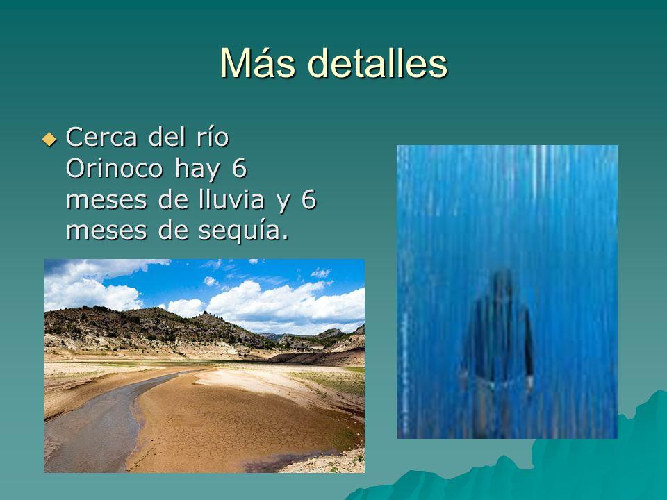 Más detalles Cerca del río Orinoco hay 6 meses de lluvia y 6 meses de sequía.