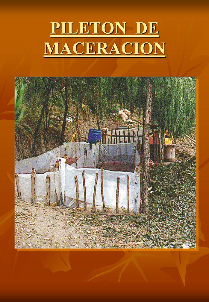PILETON DE MACERACION