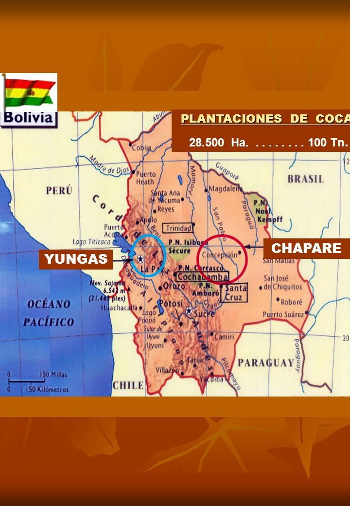 PLANTACIONES DE COCA 28.500 Ha. . . . . . . . . 100 Tn. CHAPARE YUNGAS
