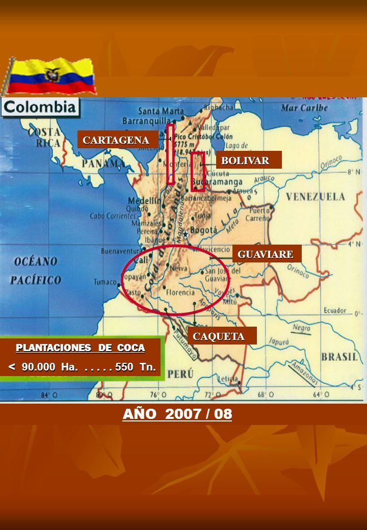 AÑO 2007 / 08 CARTAGENA BOLIVAR GUAVIARE CAQUETA PLANTACIONES DE COCA