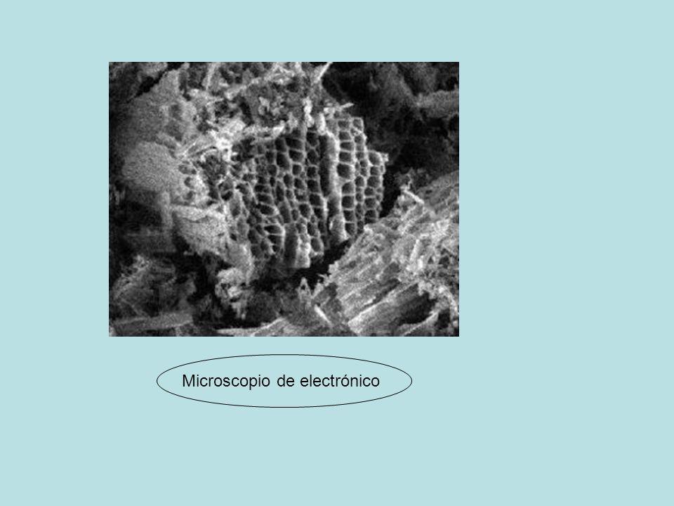 Microscopio de electrónico