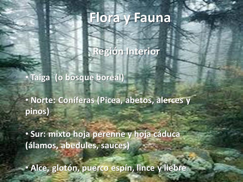 Flora y Fauna Región Interior Taiga (o bosque boreal)