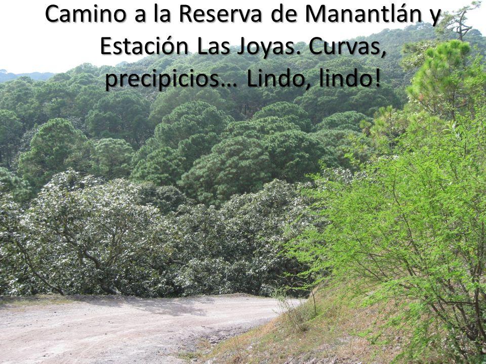 Camino a la Reserva de Manantlán y Estación Las Joyas