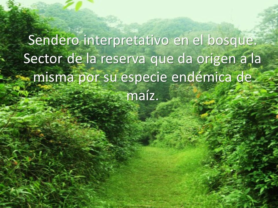 Sendero interpretativo en el bosque