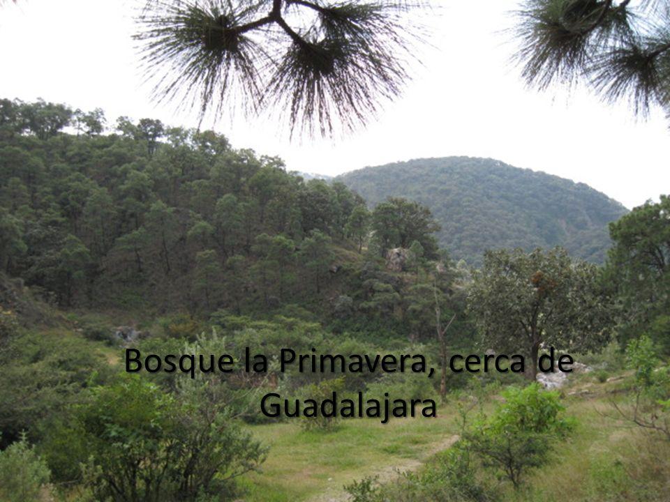 Bosque la Primavera, cerca de Guadalajara