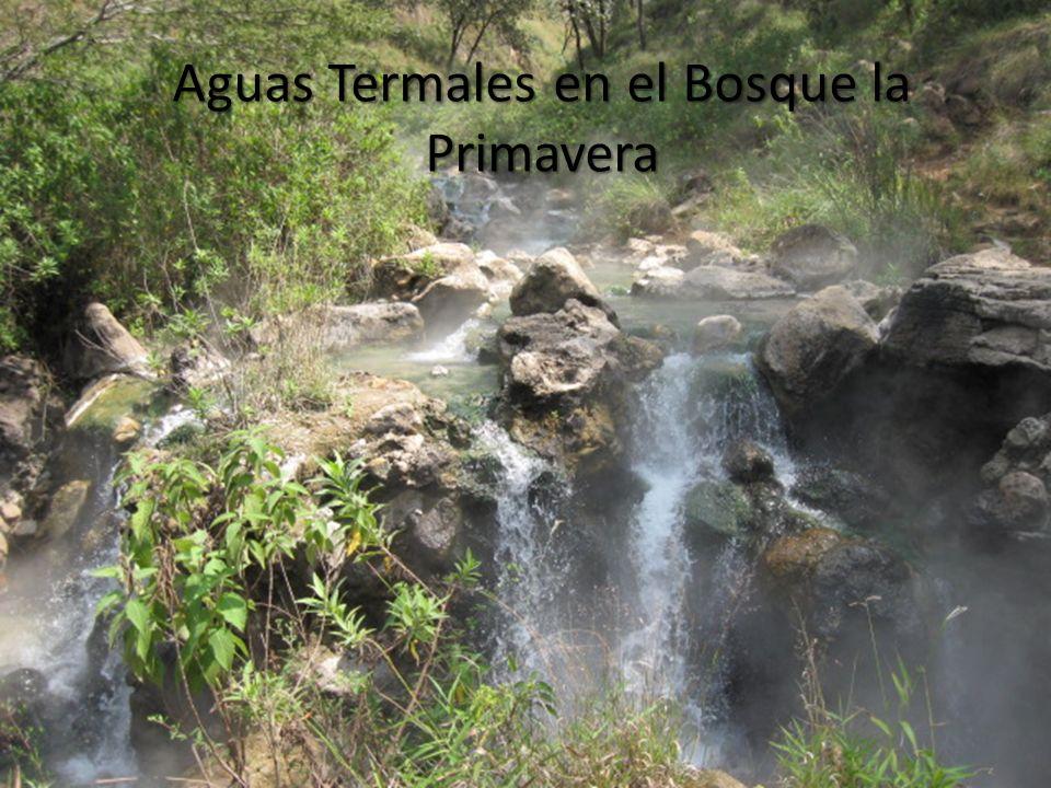 Aguas Termales en el Bosque la Primavera