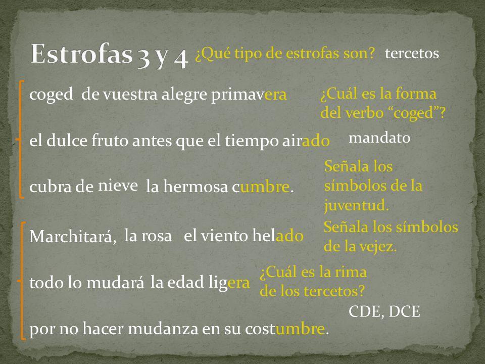 Estrofas 3 y 4 ¿Qué tipo de estrofas son tercetos. coged.