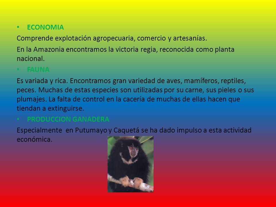 ECONOMIA Comprende explotación agropecuaria, comercio y artesanías. En la Amazonia encontramos la victoria regia, reconocida como planta nacional.