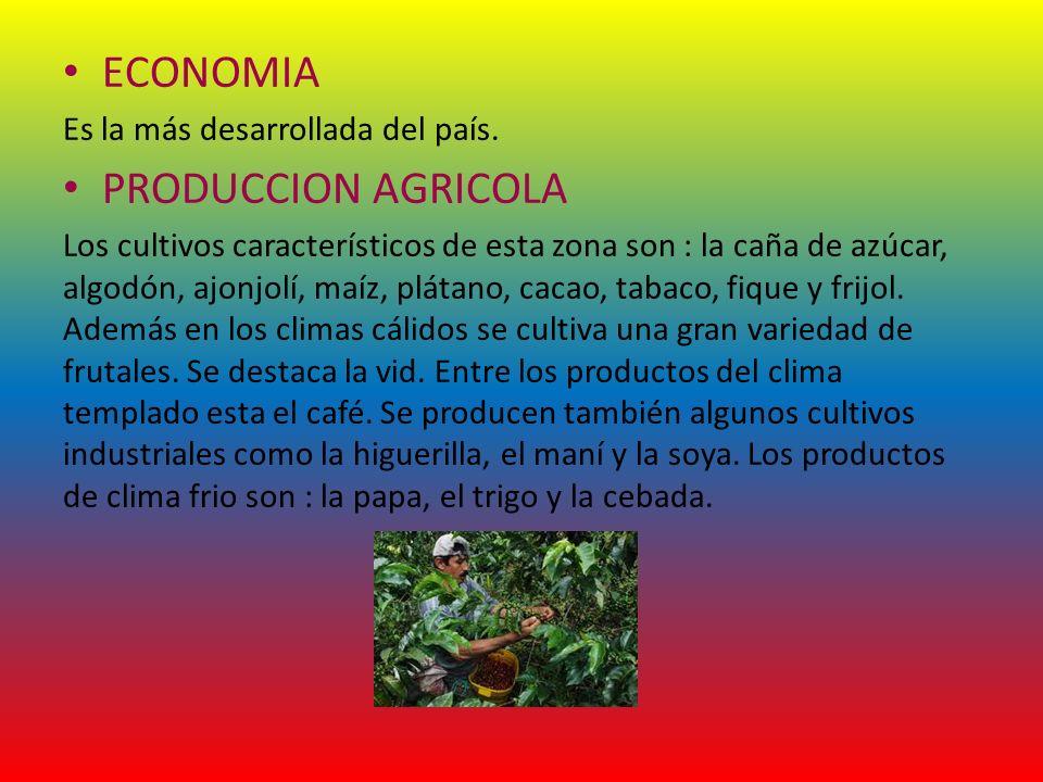 ECONOMIA PRODUCCION AGRICOLA Es la más desarrollada del país.