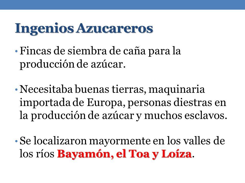 Ingenios Azucareros Fincas de siembra de caña para la producción de azúcar.