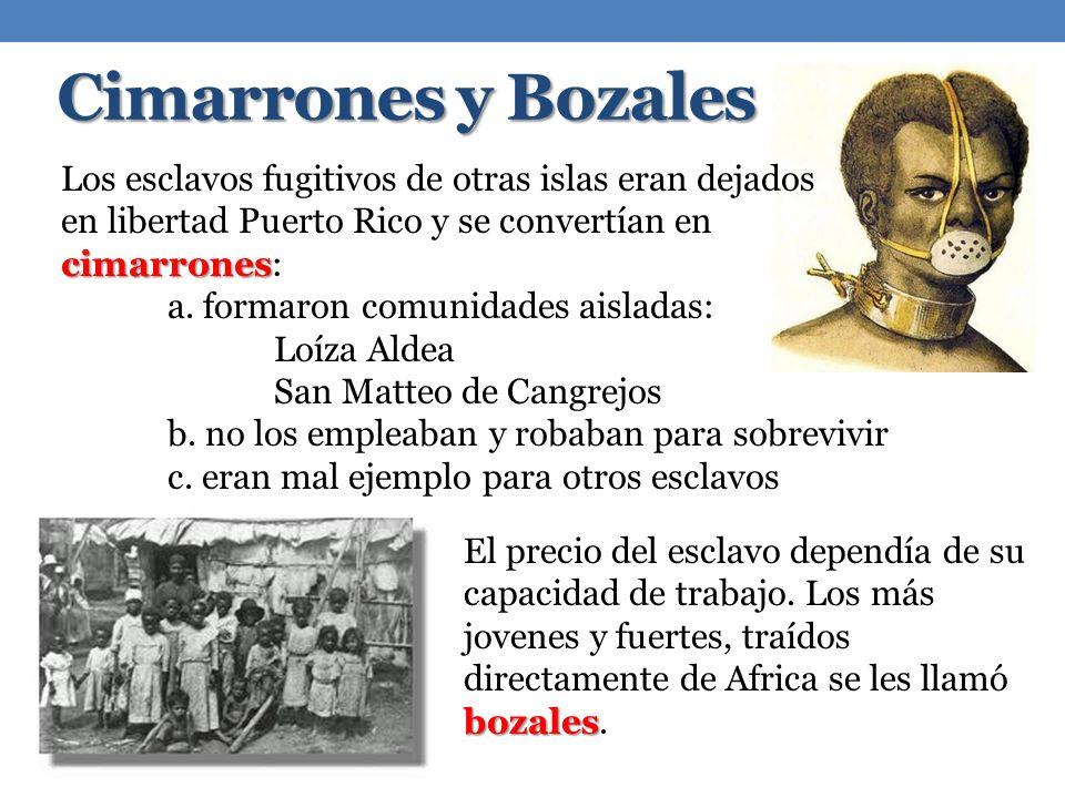 Cimarrones y Bozales Los esclavos fugitivos de otras islas eran dejados en libertad Puerto Rico y se convertían en cimarrones: