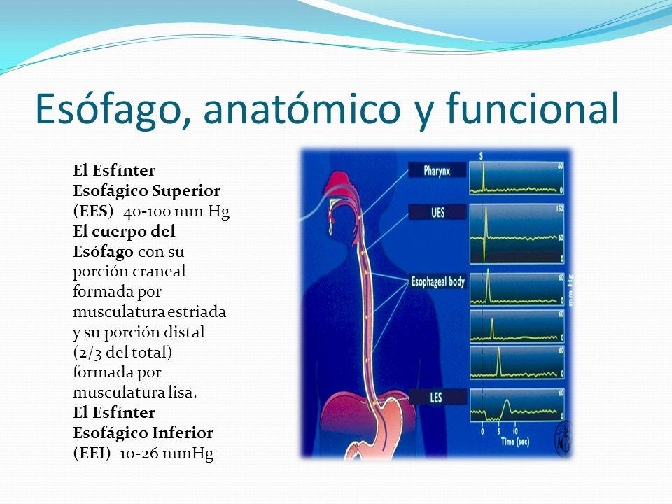 Esófago, anatómico y funcional