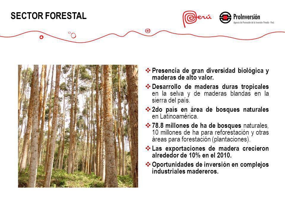 SECTOR FORESTAL Presencia de gran diversidad biológica y maderas de alto valor.