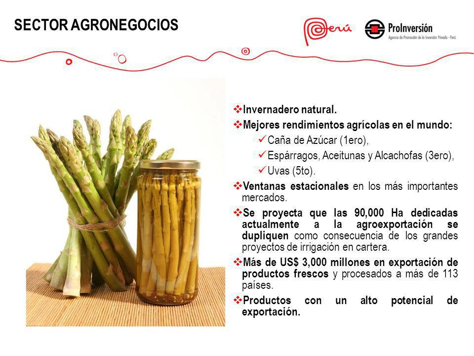 SECTOR AGRONEGOCIOS Invernadero natural.