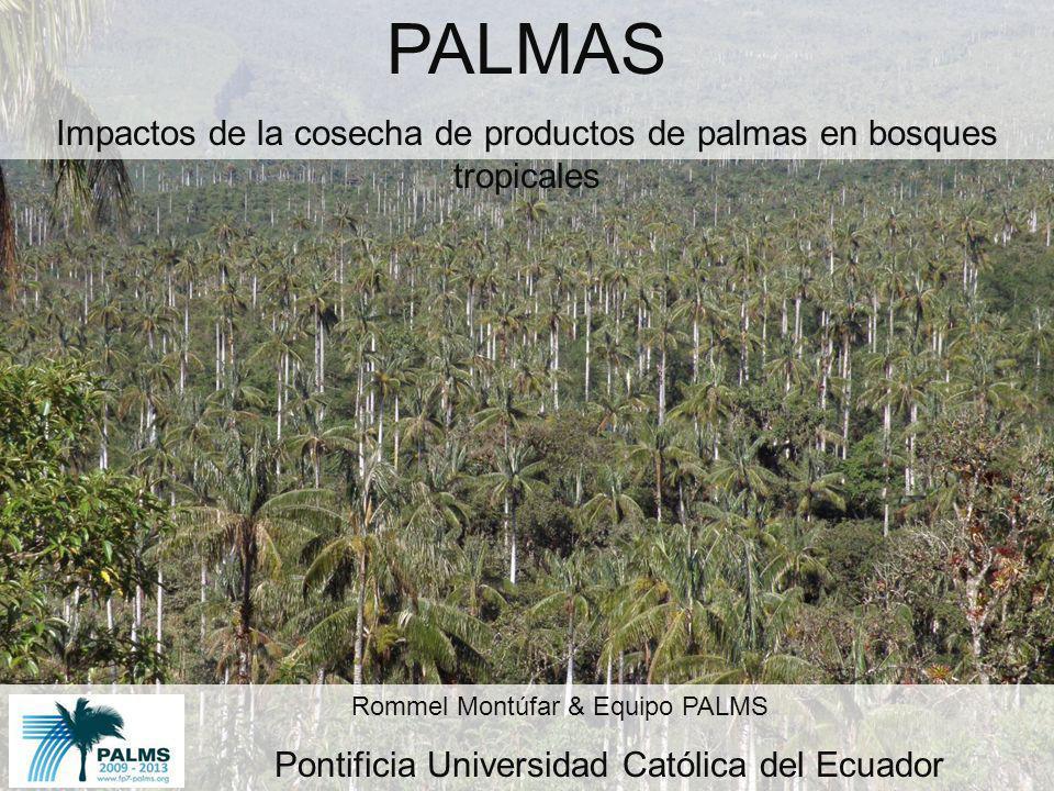 PALMAS Impactos de la cosecha de productos de palmas en bosques tropicales. Rommel Montúfar & Equipo PALMS.