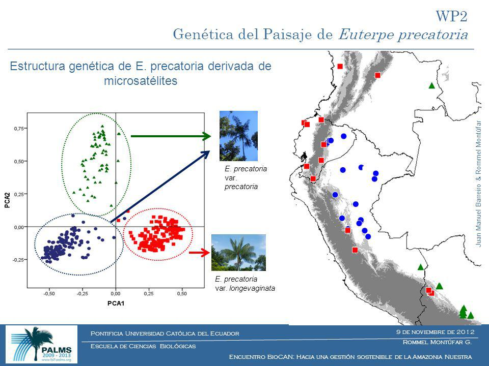 Estructura genética de E. precatoria derivada de microsatélites