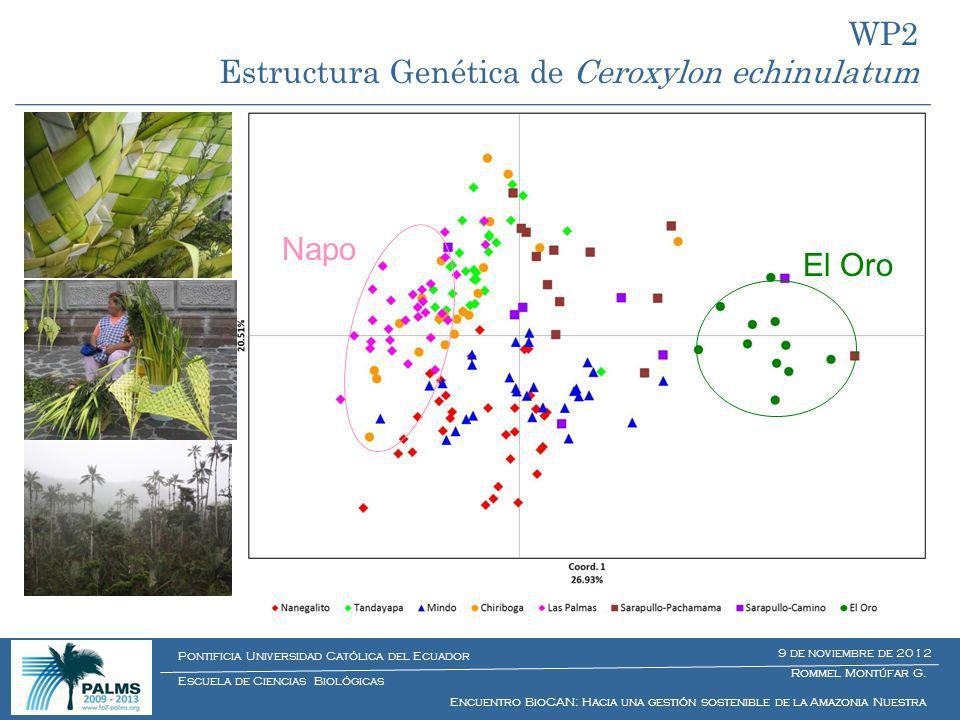 Estructura Genética de Ceroxylon echinulatum